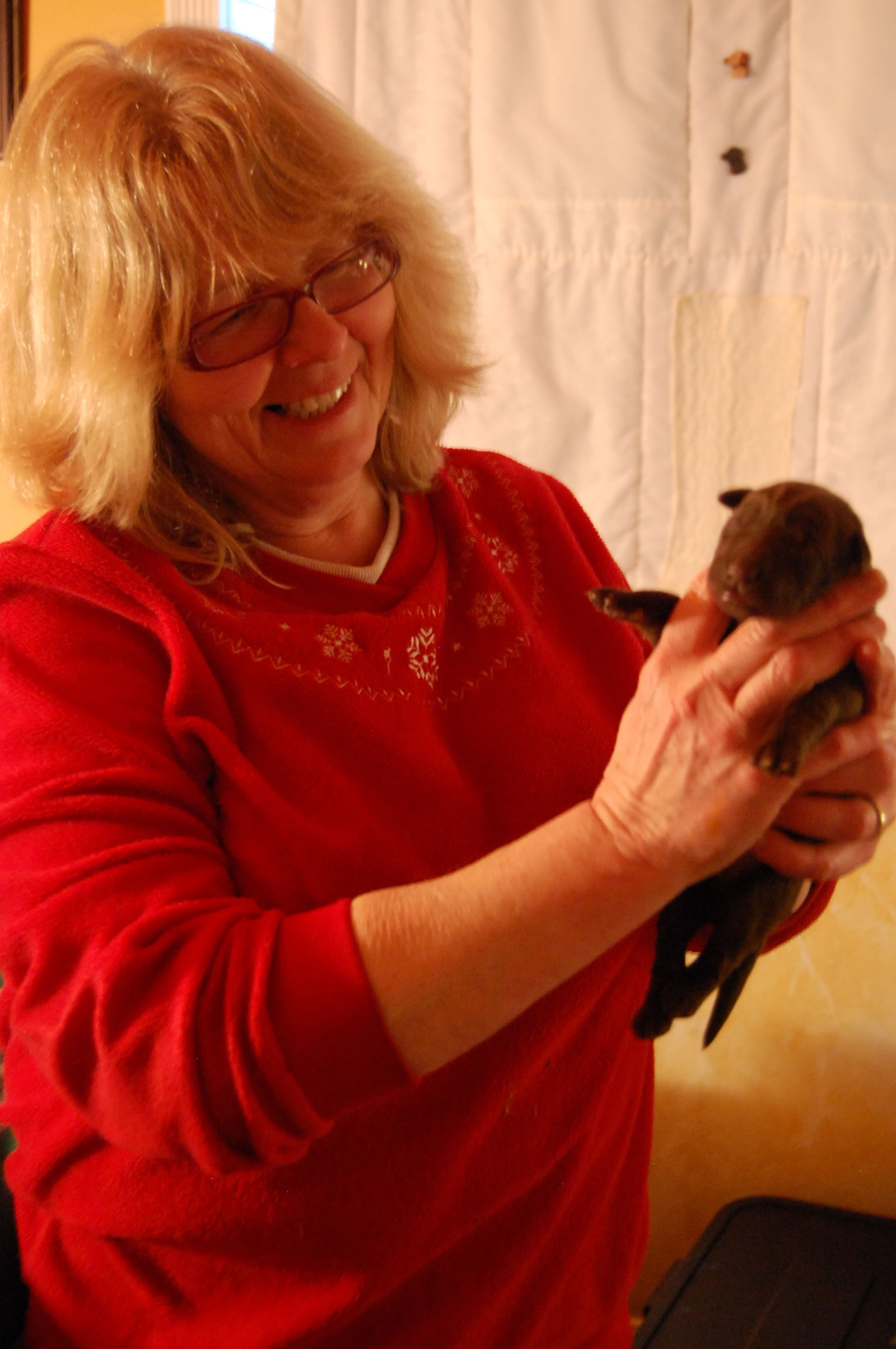 Laurel Cook With Neonatal Chocolate Lab Baby Lab Culandubh Kennels Of Clayton Ontario