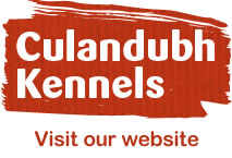 Ottawa Valley dog breeder Culandubh Kennels website
