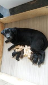 Fibi avec ses 10 petits - 08_04_16 (3)